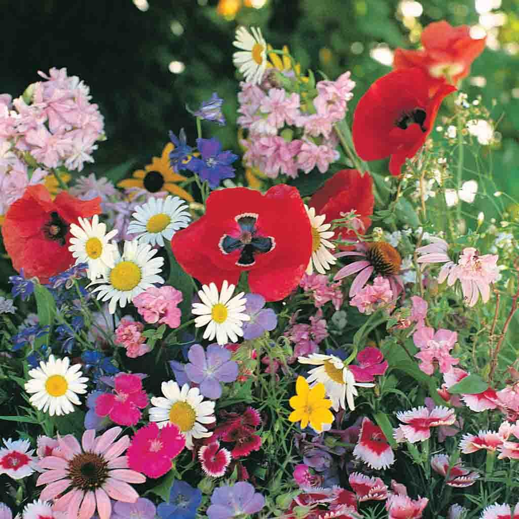 Wildflower Shade Mix Economy Packet Seed