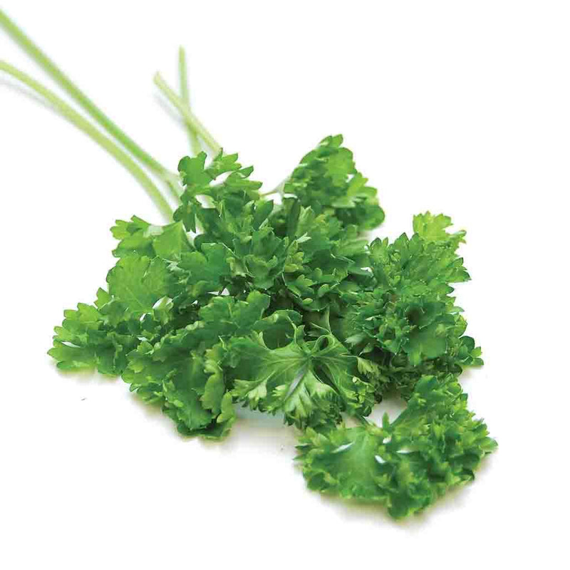Curled Darki Parsley