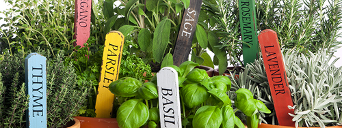 Close-up of an assortment of various herbs growing in containers.