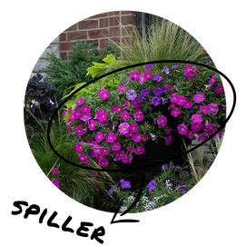 Circular image of a statement container with beautiful blooming petunias the