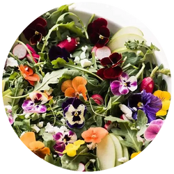 Some pretty little edible flowers sitting on top of a bowl of leafy greens.