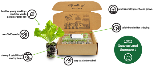 Image of the Plantlings safe and secure shipping box that your plants will arrive in, packaged neatly in their clamshells.