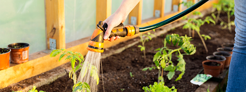 A gardener waters their plants in their outdoor garden using a hose.