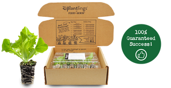 an example of the plantlings shipping box and how they are delivered to you