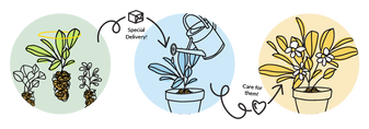 Illustration of how plantlings work! First you pick your plantling, it is delivered to you, you pot or plant them and then care for them into maturity.