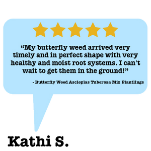 customer review on the butterfly weed plantlings, 5 stars!