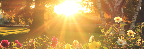 Sunlight pouring over some beautiful, blooming flowers