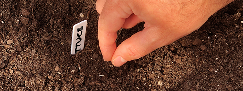 A gardener sowing a small lettuce seed directly into their outdoor garden soil.