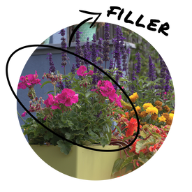 Circular image of a statement container with beautiful blooming geraniums as the
