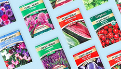 Top down view of an array of seed packets.
