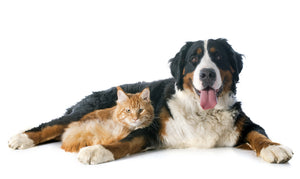 5 Hidden Dangers Threatening Your Pet's Health