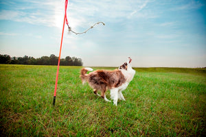 3 Expert Tips For Calming Large High Energy Dogs