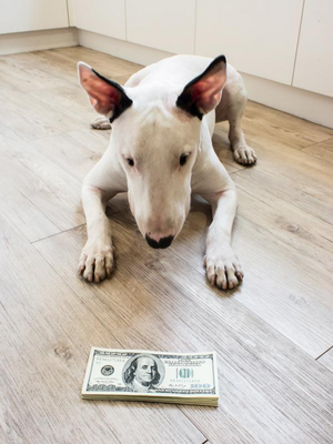 For The Devoted Owner: How To Afford Quality Dog Care