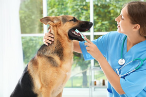 Smart Ways to Take Better Care of Your Dog's Teeth