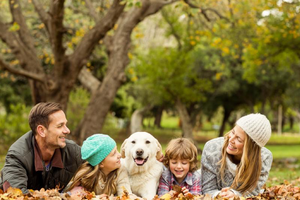 3 Tips For Helping a Dog Integrate into the Family