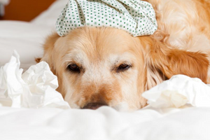 Can Dogs Get the Flu, Too?