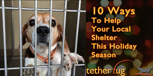 10 Ways To Help Your Local Shelter This Holiday Season