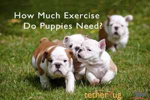 How Much Exercise Do Puppies Need Daily?