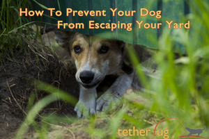 How To Prevent Your Dog From Escaping Your Yard