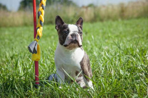 Choosing the Best Dog Toys for Small to Medium Dog