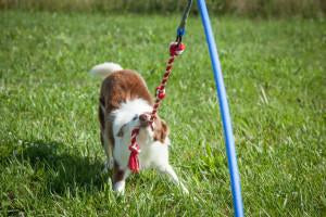 Tips on Choosing and Introducing a New Dog Toy