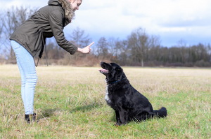 Basic Commands That Every Dog Should Know