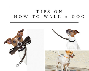 Tips on How to Walk a Dog