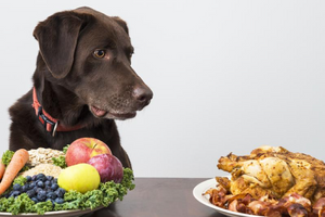 3 Ways You Can Improve Your Dog's Diet