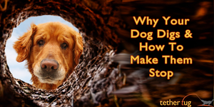 Why Your Dog Digs In Your Yard – Pain-Free Ways To Make Them Stop