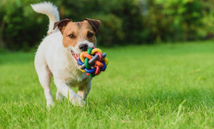 The Importance of Keeping Your Dog Healthy and Content