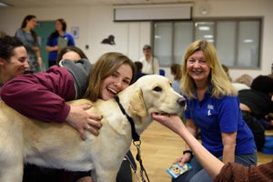 Puppy Rooms Are Transforming College Campuses During Finals Week
