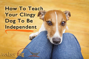 How To Teach Your Clingy Dog To Be Independent