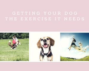 Getting Your Dog the Exercise It Needs