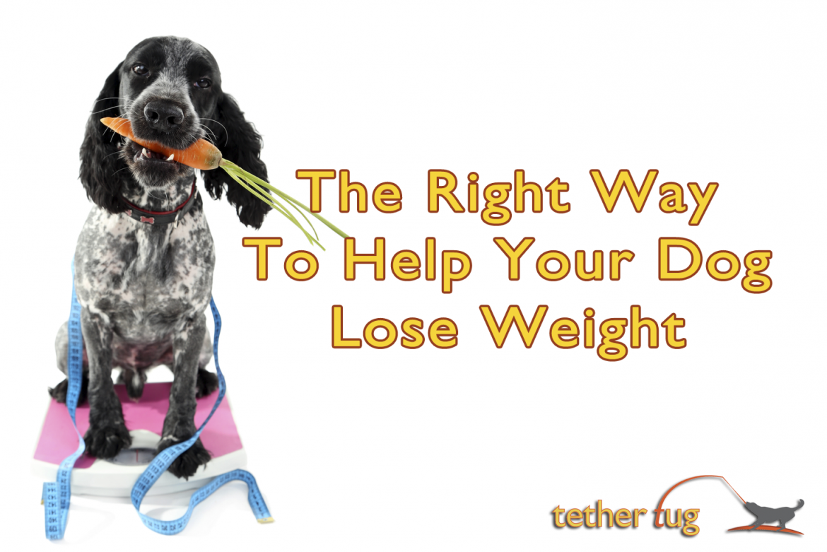the right way to help your dog lose weight - tether tug