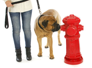Does Your Dog Pee Too Often? Tips & Treatments to Help