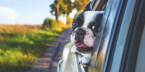 4 Must Haves For Taking Your Dog With You Everywhere
