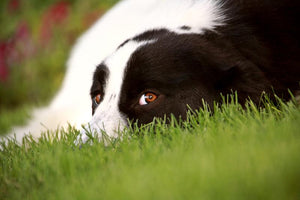 3 More Methods For Preventing Dog-Related Lawn Damage