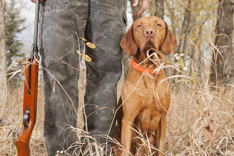 How to Keep Your Dog Safe on a Hunting Trip
