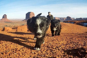 Puppies Rescued From Desert are Now Living Their Best Life as Instagram Superstars