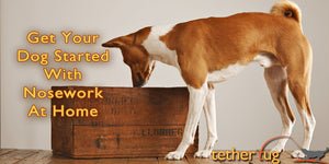 How To Get Your Dog Started With Nosework At Home