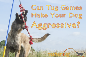 Can Tug Games Make Your Dog Aggressive?