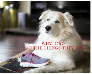 Why Dogs Do the Things They Do