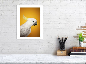 12x16 Cockatoo on yellow print
