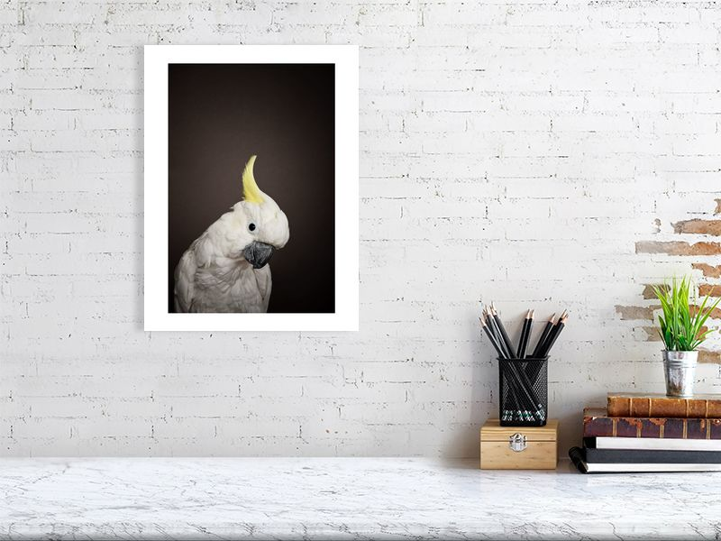 12x16 Sulphur crested Cockatoo print