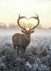 heart shaped antlers 36