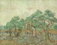 Vincent van Gogh - The Olive Orchard