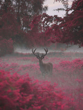Strawberry Stag