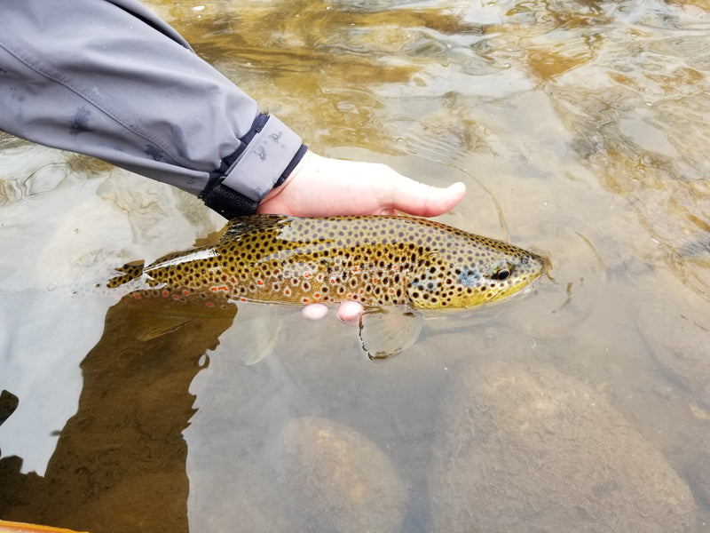 Catch and Release Fishing - Best Practices for Handling Fish