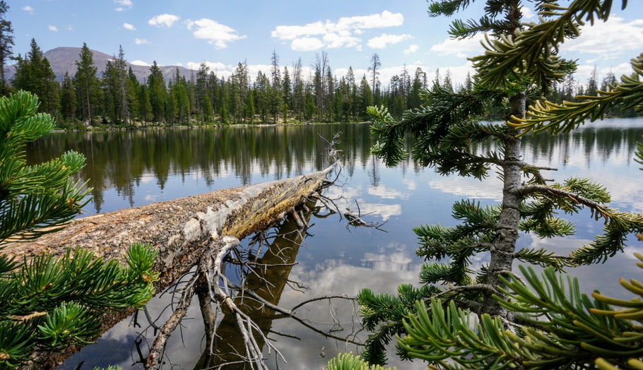 Tips for Finding Quality Fish in High Mountain Lakes