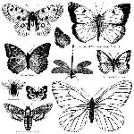 IOD BUTTERFLIES DECOR STAMPS (12X12) Iron Orchid Design
